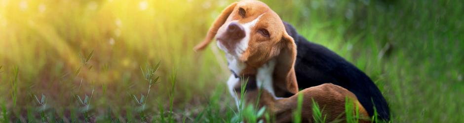 Alles gegen Flöhe und Zecken für Ihren Hund