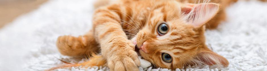 Groot assortiment kattenvoer