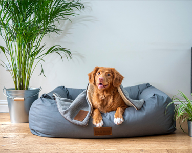 Hondenmanden en Hondenkussens