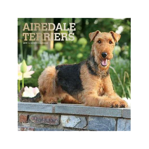 Airedale Terrier Kalender 2019