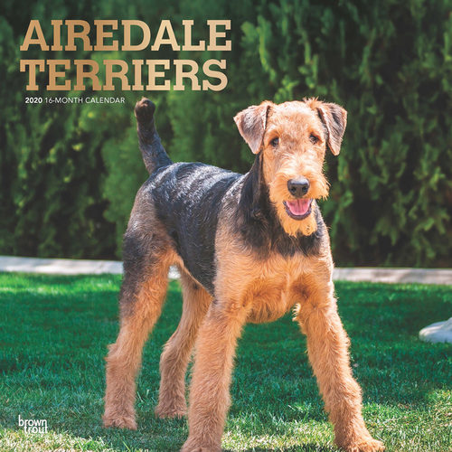 Airedale Terriers Kalender 2020
