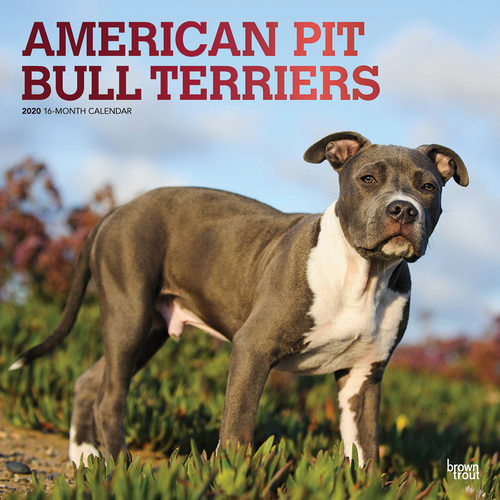 American Pitbull Terrier Calendrier 2020