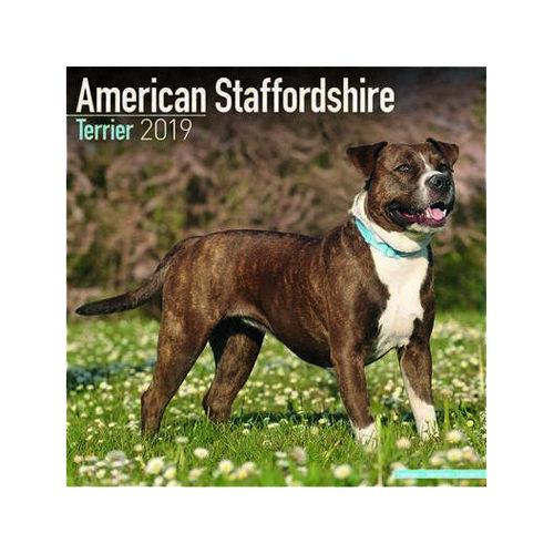 American Staffordshire Terrier Kalender 2019