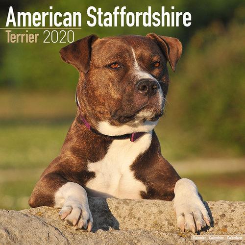 American Staffordshire Terrier Kalender 2020