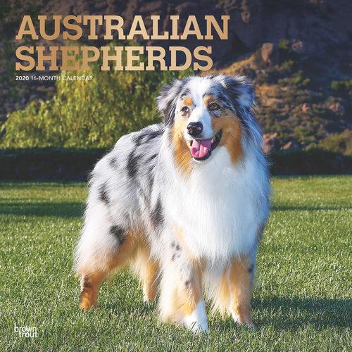 Australian Shepherds Kalender 2020