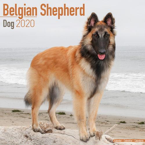 Belgian Shepherd Kalender 2020