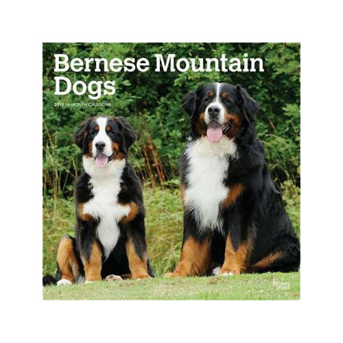 Bernese Mountain Dogs Kalender 2019