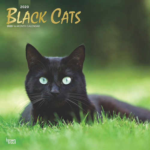 Black Cats Calendrier 2020 Chat Noir