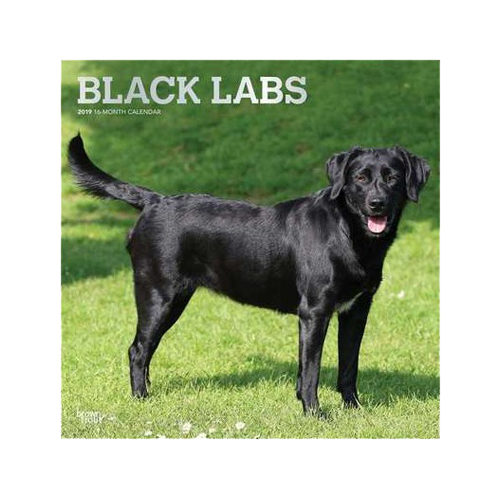 Black Labrador Retrievers Kalender 2019