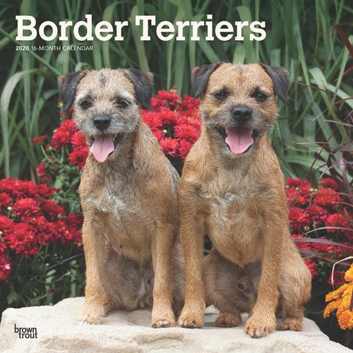 Border Terrier Kalender 2020