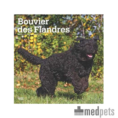 Product afbeelding van Bouvier des Flandres Kalender 2019