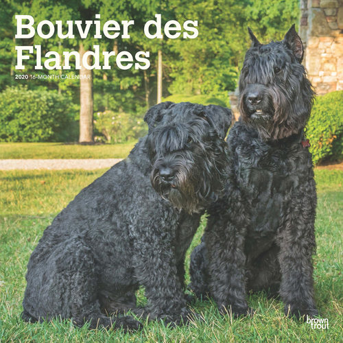 Bouvier des Flandres Calendar 2020