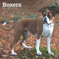 Boxer Kalender 2020