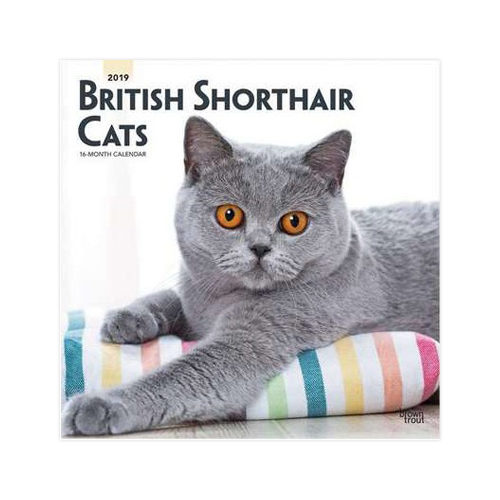 British Shorthair Cats Kalender 2019