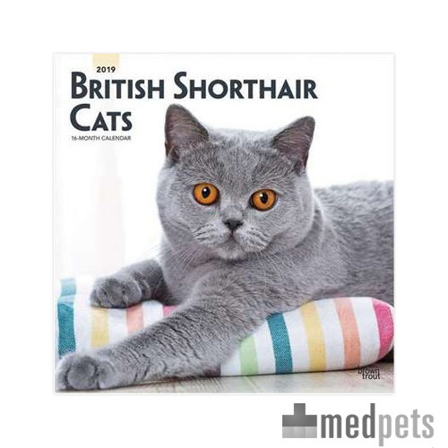 Product afbeelding van British Shorthair Cats Kalender 2019