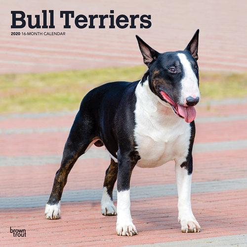 Bull Terrier Calendar 2020