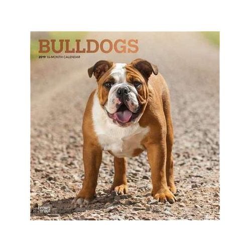bulldog kalender 2019 hond bestellen. Black Bedroom Furniture Sets. Home Design Ideas