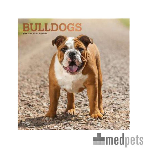 bulldogs kalender 2019 hund bestellen. Black Bedroom Furniture Sets. Home Design Ideas