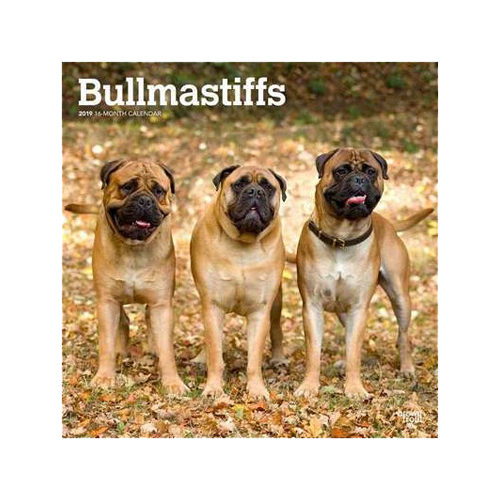 Bullmastiff Kalender 2019