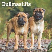 Bullmastiffs Kalender 2020