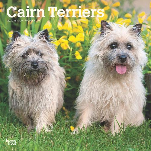 Cairn Terrier Calendar 2020