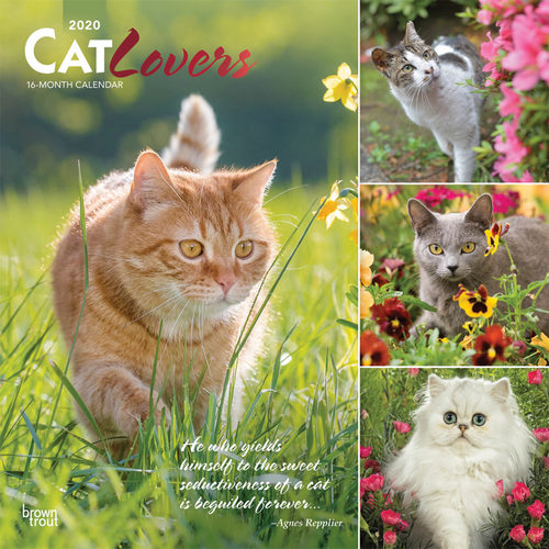 Cat Lovers Kalender 2020