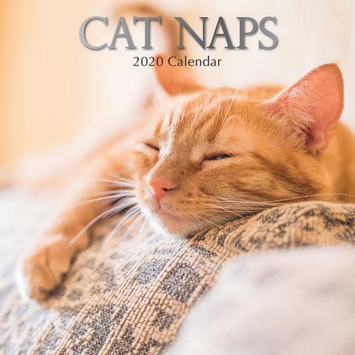 Cat Naps Kalender 2020