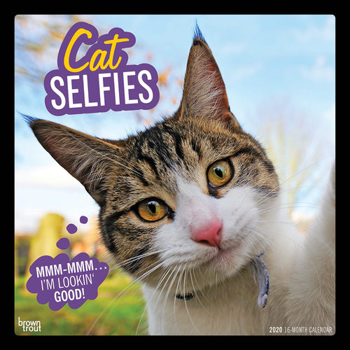 Cat Selfies Kalender 2020