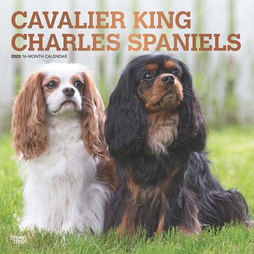 Cavalier King Charles Spaniels Kalender 2020