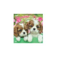 Cavalier Puppies Calendrier 2020 (Chiots Cavalier)