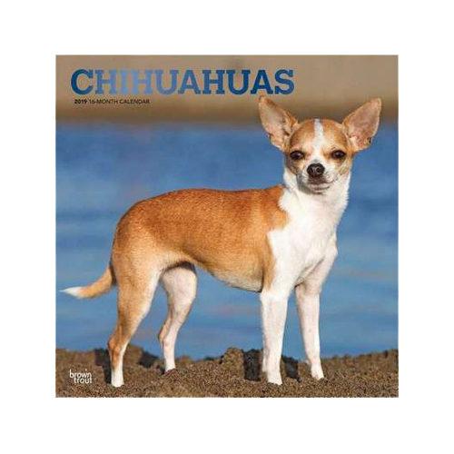 Chihuahuas Kalender 2019