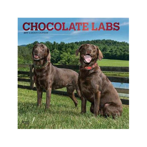 Chocolate Labrador Retriever Kalender 2019