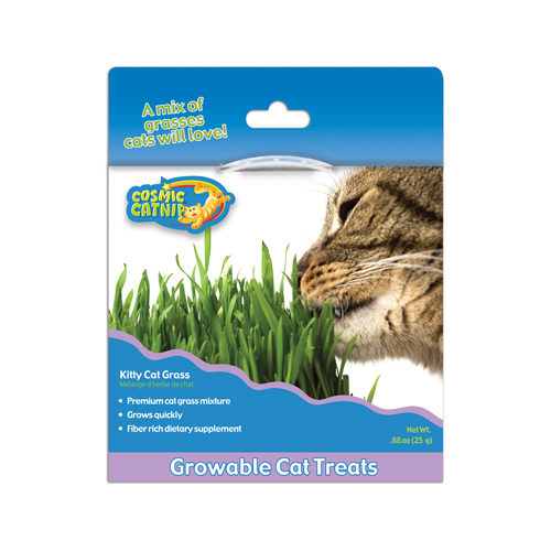 Cosmic Kitty Grass
