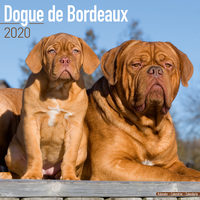Dogue de Bordeaux Kalender 2020