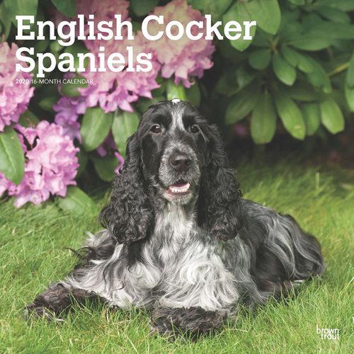 Cocker Spaniel Anglais Calendrier 2020