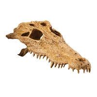 Exo Terra Crâne de Crocodile