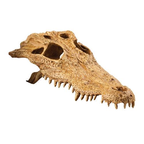 Exo Terra Krokodilschädel