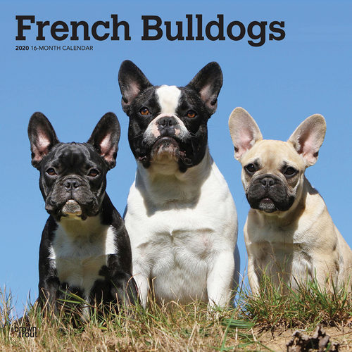 French Bulldogs Kalender 2020