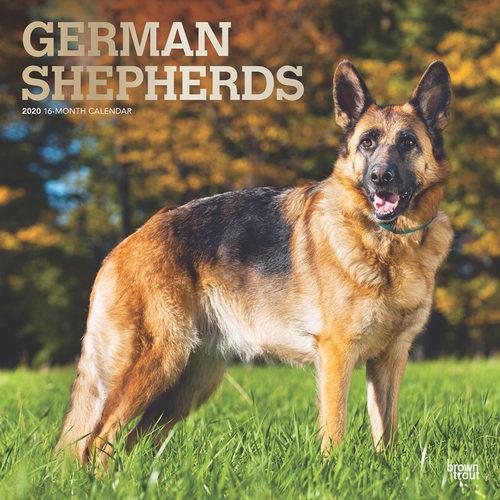 German Shepherd Kalender 2020