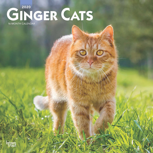 Ginger Cats Calendrier 2020 Chat Roux