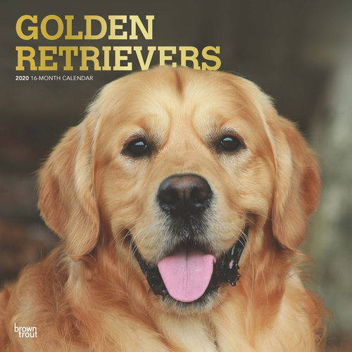 Golden Retriever Kalender 2020