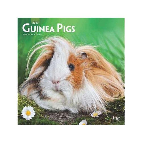 Guinea Pigs Kalender 2019
