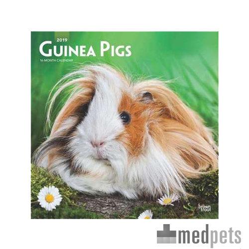 Product afbeelding van Guinea Pigs Kalender 2019