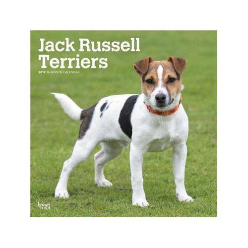 Jack Russell Terriers Kalender 2019