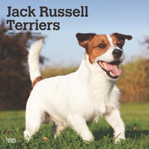 Jack Russell Terriers Kalender 2020