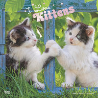 I Love Kittens Calendrier 2020 (Chatons)