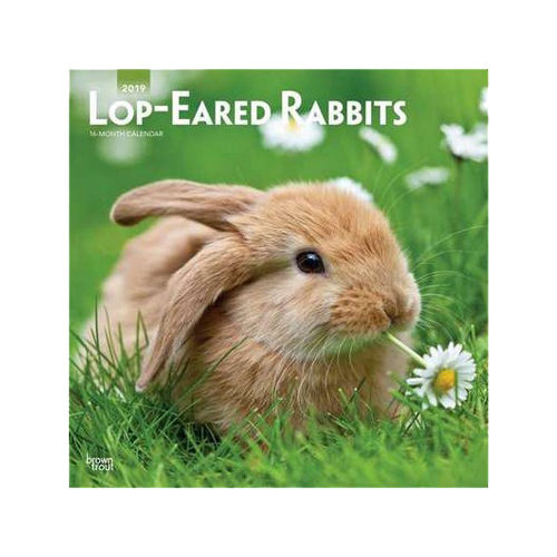 Lop-Eared Rabbits Kalender 2019