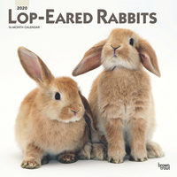 Lop-Eared Rabbits Kalender 2020