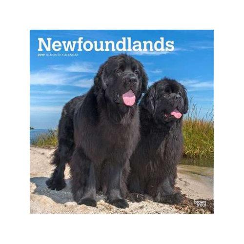 Newfoundlands Kalender 2019