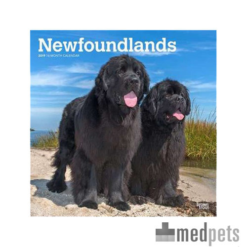 Product afbeelding van Newfoundlands Kalender 2019